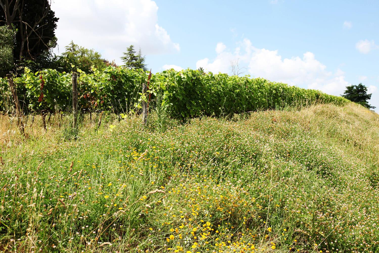 dotevini dote vini naturali syrah viognier vigneto